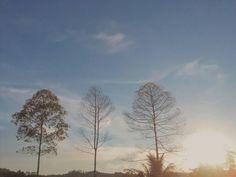 Three tree and Sunset