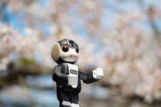 シャープが手がけるモバイル型ロボット電話「ロボホン」1周年記念プロジェクトで限定アイテムを販売 | クラウドファンディング - 未来ショッピング