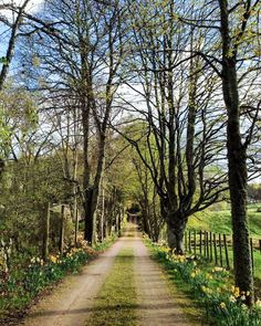 Early spring: The road to The Dulaig in Grantown-on-Spey (Scotland) by Debbie Lusk