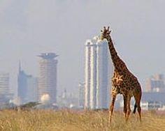 Nairobi National Park, Kenya