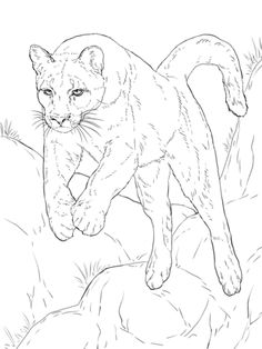 Click to see printable version of Leaping Cougar coloring page