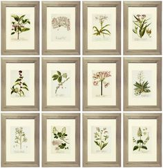 Free Lavender Botanical Printables Free Printable Lavender Gallery Wall with beautiful botanical prints. Images are formatted to be printed for an x or x frame.Beautiful Creatures Beautiful Creatures may refer to: Vintage Botanical Prints, Botanical Art, Vintage Prints, Vintage Wall Art, Impressions Botaniques, Contemporary Abstract Art, Diy Décoration, Free Prints, Clipart