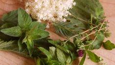 Gyógynövények hatóanyagai - GyógyfüvesKertem Plants, Flora, Plant