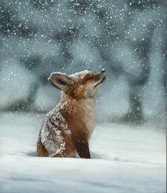 """henkheijmans: """"The lost little fox, 2018 - by Fabiano Cabral, Brazilian """" Animals And Pets, Baby Animals, Funny Animals, Cute Animals, Beautiful Creatures, Animals Beautiful, Animal Pictures, Cute Pictures, Beautiful Pictures"""