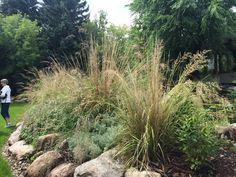 Cool Staudeng rtner Christian H Kre von Sarastro Stauden schreibt welche Pflanzen sich unter diesen Bedingungen bew hrt haben