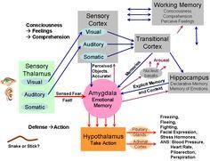 Emotional Brain Map - Defend then comprehend