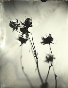 'Untitled 8', Wet Plate Collodions, Michelle Rogers Pritzl