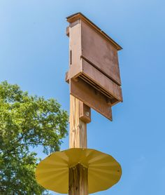 Use Bat Houses for Mosquito Control - Nature and Environment - MOTHER EARTH NEWS - Controlling mosquito populations can be tricky. Luckily, you can summon a natural ally by building a homemade bat house. Build A Bat House, Bat House Plans, Bat Box, Mosquito Control, Pest Control, Outdoor Projects, Outdoor Decor, Mother Earth News, String Lights Outdoor
