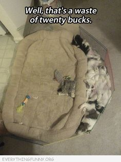 funny caption pictures cats dogs sleeping outside of pillow waste of twenty bucks