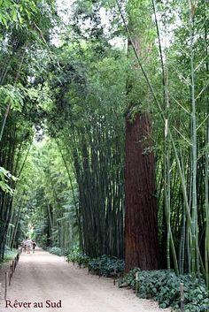 La bambouseraie - Anduze