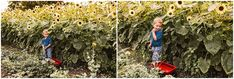 Westfield Indiana Family Pictures   Sunflower Field + Farm #familyphotos #whattowear #familyphotography #indianapolisphotos Family Photography Outfits, Farm Photography, Photography Branding, Video Photography, White Photography, Family Farm Photos, Family Pictures, Westfield Indiana, Kids Going To School