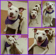 Love her! #adoptable at #Joliet township animal control on Facebook.  #newyear #adoptme