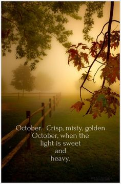 | October | October. Crisp, misty, golden October, when the light is sweet and heavy.