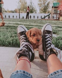 Cute Puppies, Cute Dogs, Dogs And Puppies, Doggies, Cute Baby Animals, Animals And Pets, Funny Animals, Puppy Care, Cute Creatures