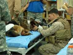 Marine taking care of his wounded GSD