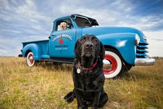 Bailey and Banjo Photography | Pet Photography
