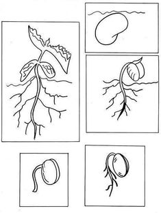 Free Coloring Of Bean Plant Life New Life Cycle Of Flower Worksheet Preschool Worksheets Science Worksheets, Science Lessons, Teaching Science, Science Projects, Art Lessons, Plant Science, Science And Nature, Spring Activities, Preschool Activities