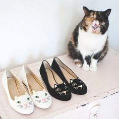 The cutest litter of kittens we ever did see.  @TalkShoes- / Charlotte Olympia
