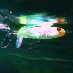 Swimming Fish Bait - Buy Online Off - Wizzgoo Store Fishing Bait, Carp Fishing, Best Fishing, Trout Fishing, Fishing Tips, Fishing Stuff, Salmon Fishing, Saltwater Fishing, Fishing Tackle