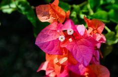Barbados Hidden Beach, Barbados, Grenada, Rum, Caribbean, Old Things, Easter, The Incredibles, Flowers
