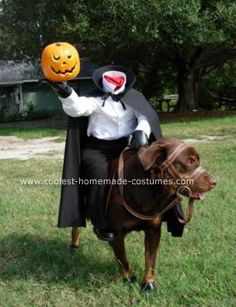 This is a homemade headless horseman dog costume I made myself. The frame for the headless horseman is made out of PVC pipe, then it is wrapped with batting