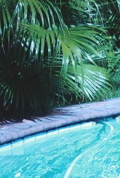 vegetation and pool