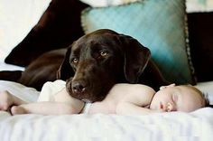 cute baby and dog picture