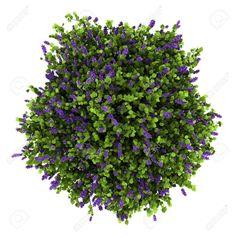 shrubs top view png - Tìm với Google