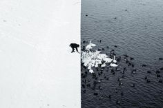 Polen vinterfugle