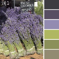 Master bedroom colors. lavendar color palette | fresh lavender color palette | color & spice