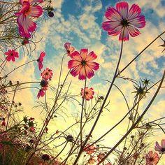 Photography nature flowers sun New Ideas Flower Phone Wallpaper, Nature Wallpaper, Flower Aesthetic, Pretty Wallpapers, Flowers Nature, Belle Photo, Pretty Pictures, Beautiful Flowers, Nature Photography