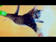 Look at This Cat of the Day: Kitty's Got Hops!
