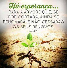 Jó 14:7