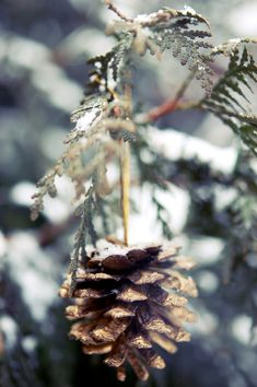 pinecones - Decorating With Pinecones