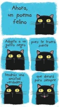"""Un poema gatuno"" creación original para Mr. Cat https://www.facebook.com/gatos.por.todas.partes"