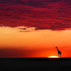 Giraffe in harmony with the sunset, photo by Moro Monuments, Silhouettes, Amazing Nature, View Photos, Serenity, Natural Beauty, Beautiful Places, Beautiful Sunset, Amazing Places