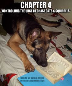 Funny Sleeping German Shepherds | 1000+ images about German Shepherd Dogs on Pinterest | Lol funny ...