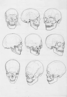 Рисунок черепа Keto Coleslaw keto pulled pork and coleslaw Human Skeleton Anatomy, Skull Anatomy, Human Anatomy Art, Anatomy Sketches, Anatomy Drawing, Drawing Sketches, Art Drawings, Skeleton Drawings, Skeleton Art