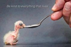 BE KIND TO EVERY LIVING THING ON EARTH!!!!