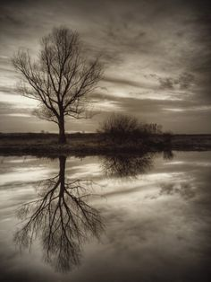 This photograph is reflecting the tree into the water. The bush is also being reflected.