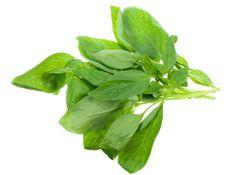 El tulsi, también llamado albahaca sagrada, es una planta que desde tiempos…