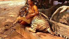 Image result for monk tiger