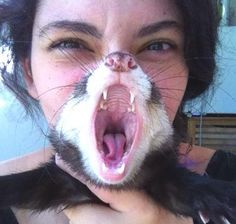 Friend took a photo with her ferret at the exact right moment. (via)