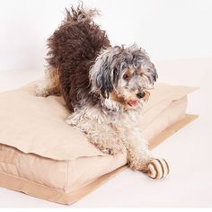 Our Lazy Bed is back in stock! For retailers near you please feel free to contact us ;) #pattifurry #backinstock #dogaccessories