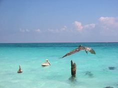 Pelicanos en la Reserva de la Biósfera Sian Ka'an  Para mas información y citas contáctanos:  Web: http://www.tulumrealestate.com/  Cel 984.113.5749 - 984.130.6441  Email: info@tulumrealestate.com  #Tulum #RivieraMaya #Mexico