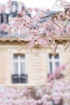 Image Paris, Springtime In Paris, Decoration Ikea, My Little Paris, Paris Images, French Home Decor, Spring Blossom, Hello Spring, Handmade Home