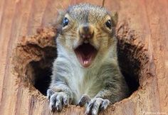 Squirrels of Oshawa