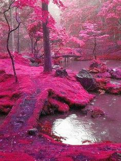 Funny pictures about Pink forest. Oh, and cool pics about Pink forest. Also, Pink forest photos. Places To Travel, Places To See, Travel Destinations, Travel Stuff, Work Travel, Train Travel, Summer Travel, Business Travel, Holiday Travel