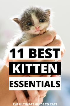 I have been thinking about adopting a kitten and these must have kitten supplies like kitten food, kitten bed, and kitten toys are so helpful so I don't forget about them!! Funny Cat Faces, Funny Cat Photos, Funny Cats And Dogs, Cat Breeds List, Large Cat Breeds, Funny Cat Wallpaper, First Time Cat Owner, Kitten Beds, Kitten Food