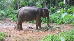Elephant trek, wordt aangeraden (er zijn nog een aantal andere olifantenplekken maar die zijn langs de weg, vrij onnatuurlijk etc.)